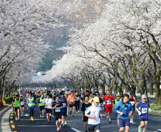 VIAJE A GYEONGJU, COREA - Maratón de flores de cerezo en Gyeongju